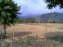 Virnell Farm 2005