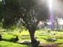 Zamboanga Cemetery 2006