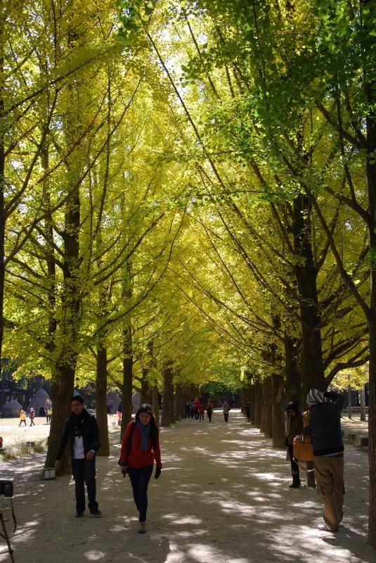 Nami Island Trees