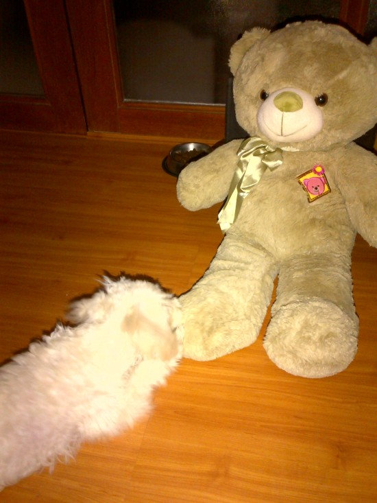 Snow and Mr Bear